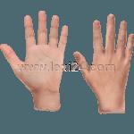 Hand<sup>F</sup>