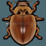 larch ladybug