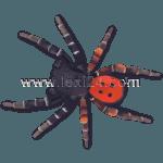 ladybird spider