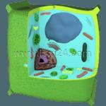растительная клетка<sup>F</sup>